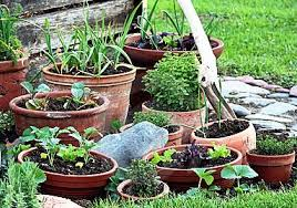 container vegetable gardens growing in