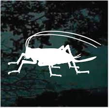 Insect Car Decals Stickers Decal Junky