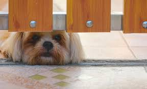 12 Diy Dog Gate Plans Make Your Own Pet Gate