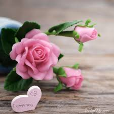 beautiful pink rose love whatsapp dp