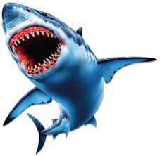 Amazon Com Shark Jaws Great White Vinyl Sticker Waterproof Decal Clothing