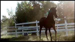 Flicka: Country Pride ( 2012 ) watch online in best quality