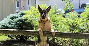 What Is The Best Invisible Dog Fence Your Buying Guide S