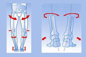 Piede Produzione Plantari Calzature Predisposte soletta ortopedica plantare  - Gavi (AL)