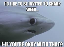16 really funny memes the shy shark