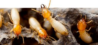 Terminix® - Powerful Pest & Termite Solutions | Defenders of Home