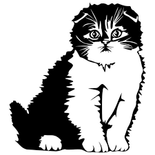 Wall Art Cat Vinyl Decal With Transfer Tape Poshmark