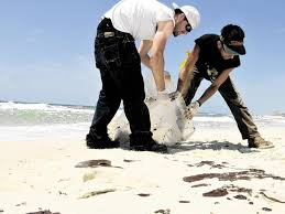 Anger grows as oil disaster affects beaches in Pensacola - News - The  Ledger - Lakeland, FL