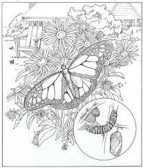 Kleurplaat Natuur Rondom Het Huis Vlinders Kleurplaten Adult
