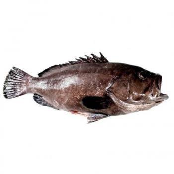 Pez cherna de 248 kilos es capturado en el Golfo de México