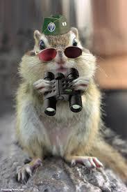 Image result for funny spy