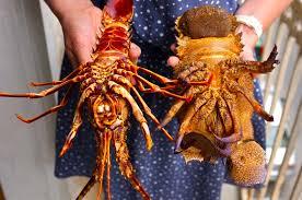 Lobster and Shrimp - Frozen Lobster ...