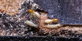 Get Carpet Termite Bug Gif