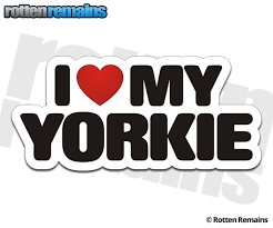 Yorkie I Love My Dog Decal Yorkshire Terrier Dogs Car Truck Window Sticker Rotten Remains High Quality Stickers Decals