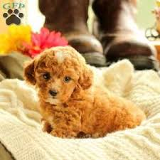 ship from gfp shipping puppies