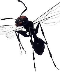 View Flying Ants With White Wings  Images