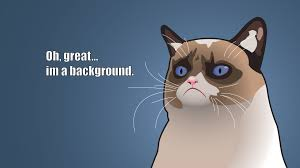 grumpy cat wallpaper with images