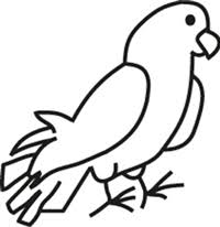 Window Decal Amazon Parrot