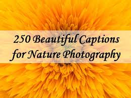 beautiful captions for nature photography the quotes master