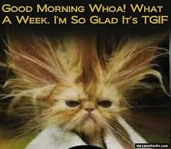png funny good morning tgif pictu