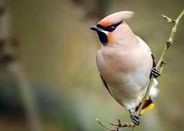 صور عصافير صور اجمل و اروع العصافير صباح الورد