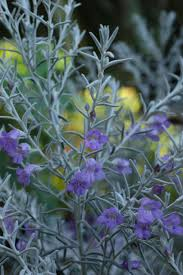 the list our 5 best native shrubs