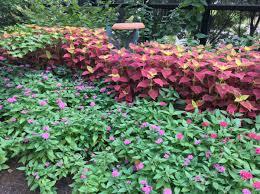 annual bedding plants alabama