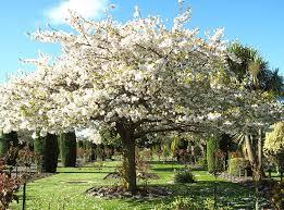 memorial gardens crematorium