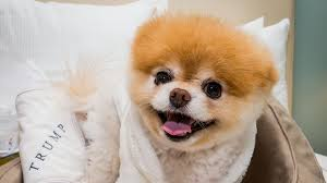 most adorable dog