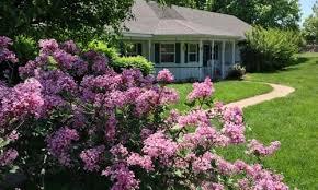 joy assisted living springfield mo