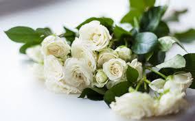 تحميل خلفيات الورود البيضاء جميلة بيضاء باقة الورود الورود