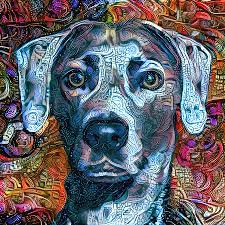 Cash The Blue Lacy Dog - Cropped Mixed ...