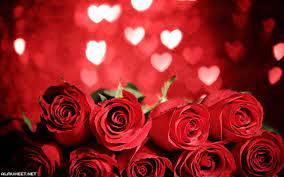 ورد جوري احمر رومانسي