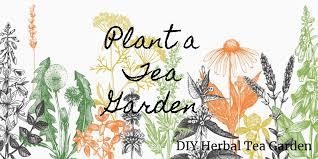 plant a tea garden diy herbal tea