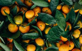 oranges mandarin fruits