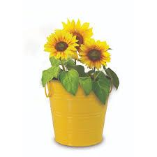 boutique gardens sunflower grow kit