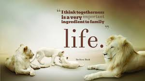 family together quotes baltana