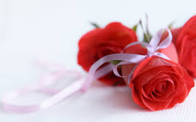 rose flower images wallpapers 55 images