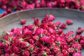 خلفيات ورود جميلة جدا اجمل صور زهور طبيعية جميلة مساء الورد