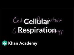 cellular respiration introduction