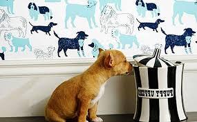 11 خلفيات مستوحاة من الكلاب تثبت أن