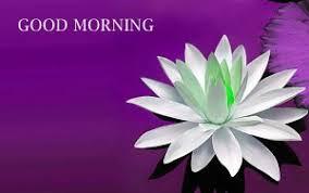 268 sunday good morning wishes images