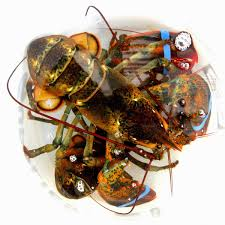 How long can lobsters live?