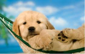 The Dog Days of Summer...a Part of the Lectionary   Congregational ...