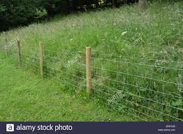 Wire Mesh Garden Stock Fence With Timber Wooden Posts Uprights With Stock Photo Alamy