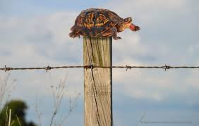 Turtle On A Fence Post Does God Exist Today