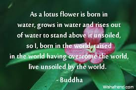 buddha quote as a lotus flower is born in water grows in water