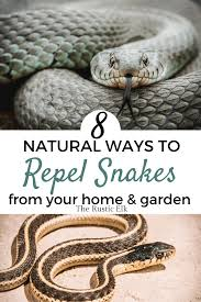 How To Naturally Repel Snakes The Rustic Elk
