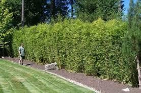 Pin On Plants Evergreen Medium To Large Broadleaf