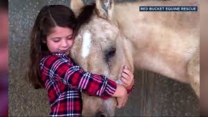 birthday gifts to help abused horses